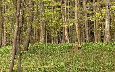 Winterwaldtour mit der Waldschule Cappenberg